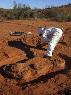 Descubrimiento de dinosaurio gigante
