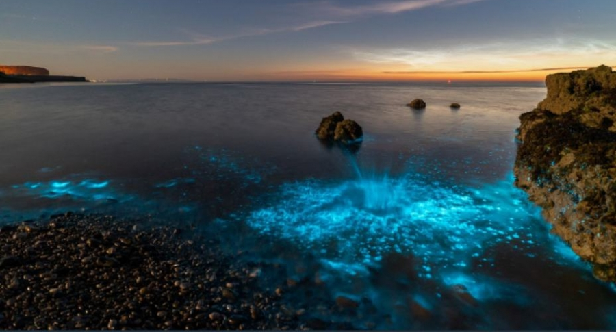 Plankton luminoso