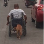 Perro empuja a su amo en silla de ruedas.