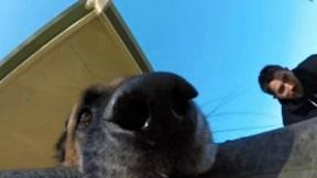 Perro se graba a sí mismo.