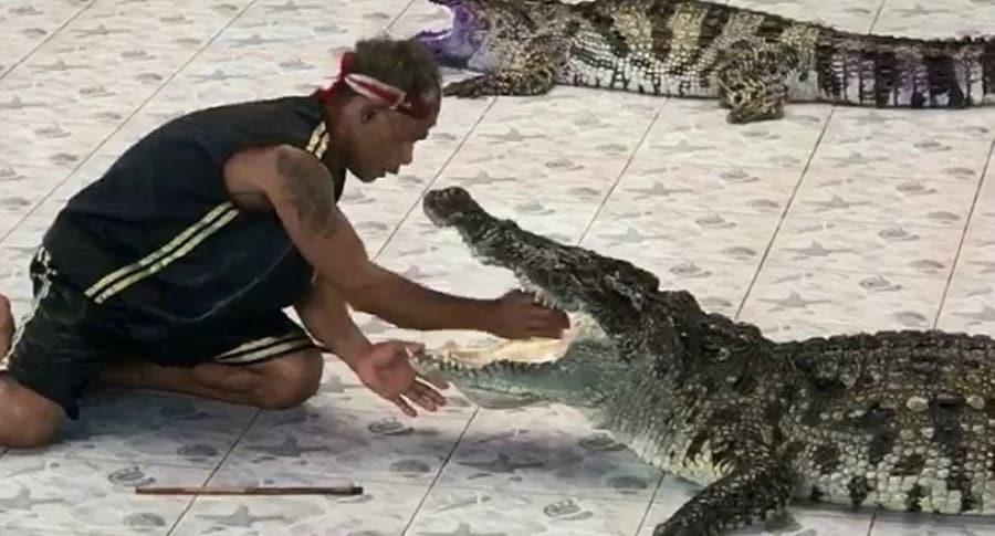 Cocodrilo ataca a cuidador.