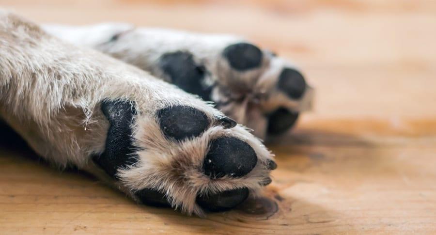Patas de perro.