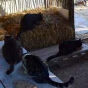 Santuario de gatos