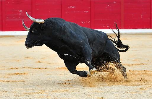 Corridas de toros