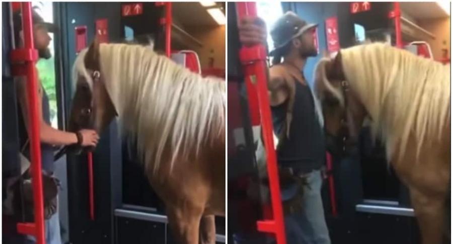 Hombre ingresa a un tren con un caballo.
