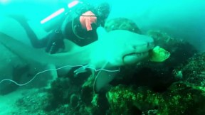 Buceador salva a tiburón.