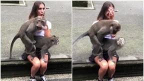 Micos tienen sexo sobre una joven.