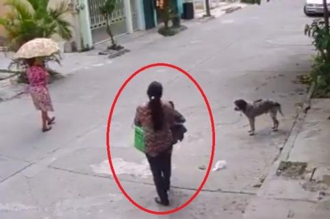 Ladronas perro