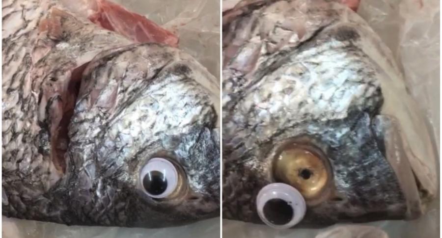 Pescados con ojos de juguete.