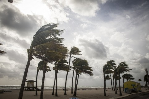Palmeras en una tormenta tropical