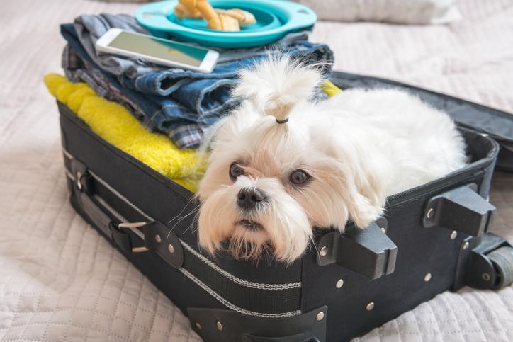 Maleta de Viaje con un perro