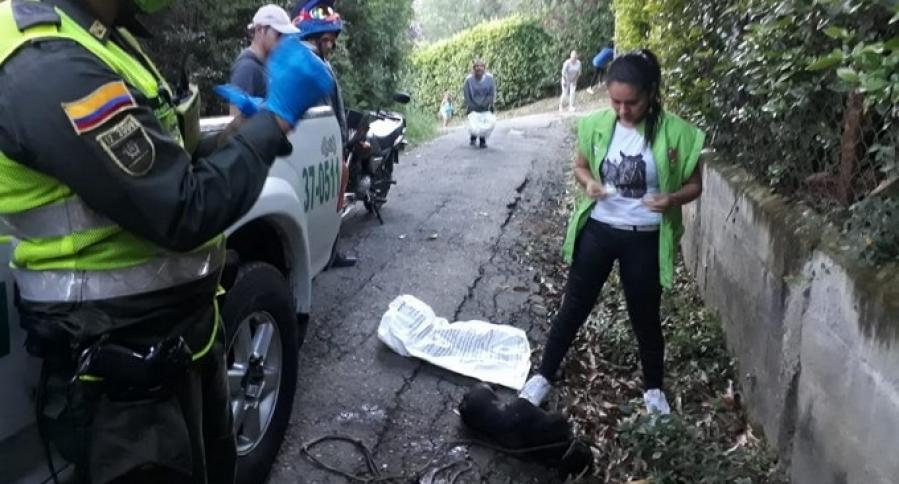 Perro asesinado en el municipio de Copacabana, Antioquia
