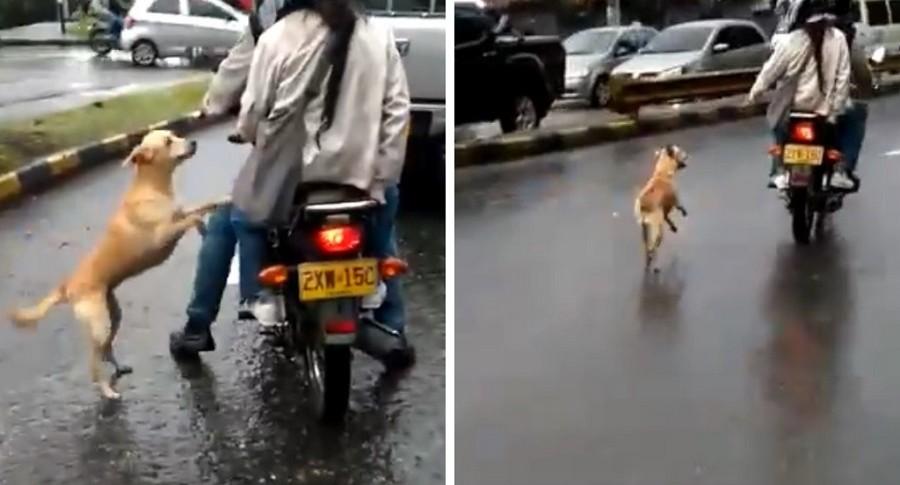 Perro abandonado en Medellín