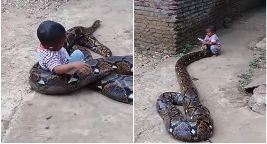 Niño juega con serpiente.