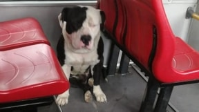 Perro abandonado en bus de Transmilenio