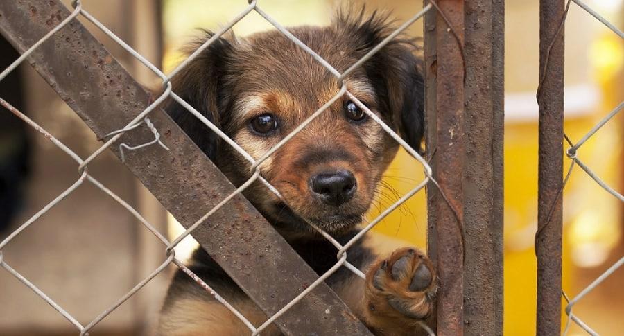 Perro en refugio