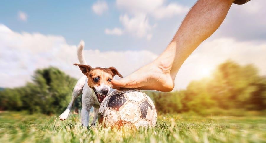 Perro futbolista