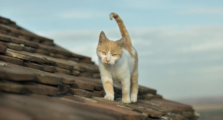 Gato en un techo