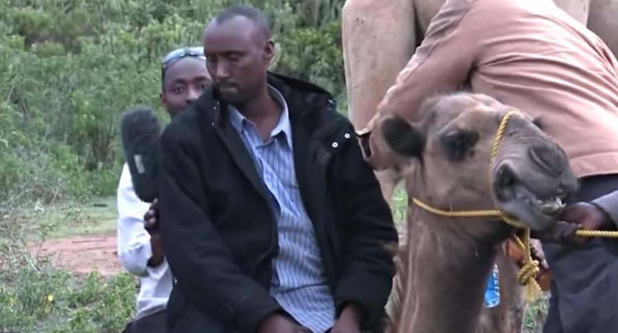 Periodistas sobre un camello.