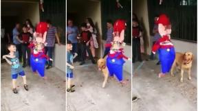 Perro en fiesta infantil.
