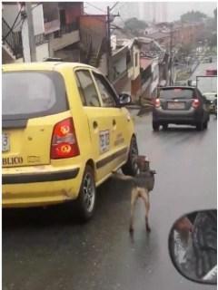 Perro persigue a supuesta dueña.