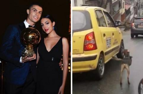 Novia de Cristiano Ronaldo y perro abandonado