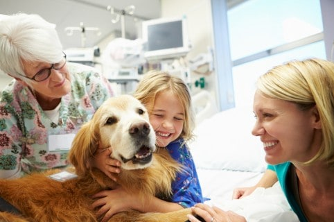 Perro doctor