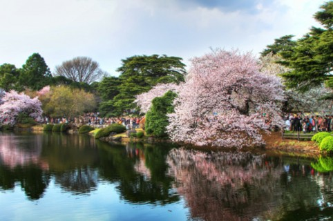 Parque jardín Shinjuku Gyoen.