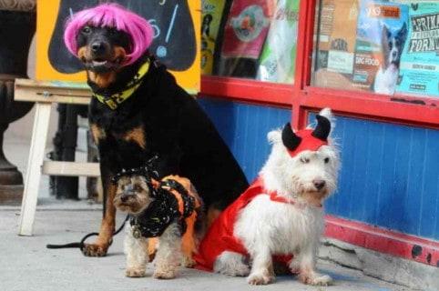 Mascotas Halloween