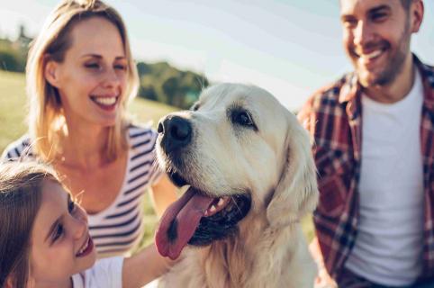 Cuidados de los perros de raza