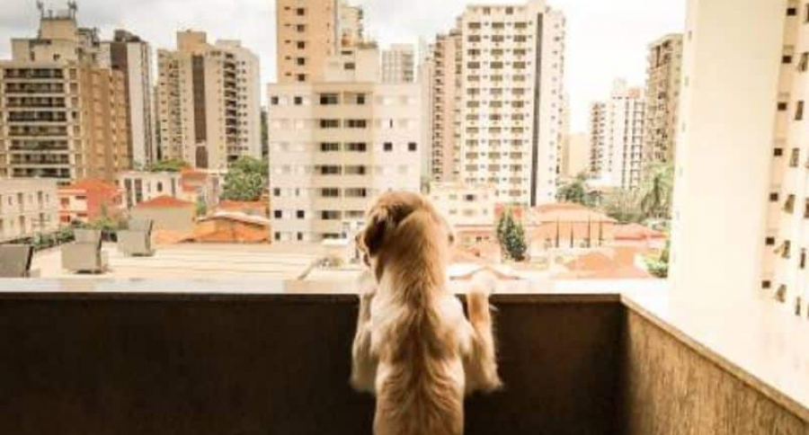 Perro en un balcón