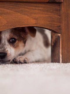 Estas son las razones por las que su perro se esconde debajo de la cama