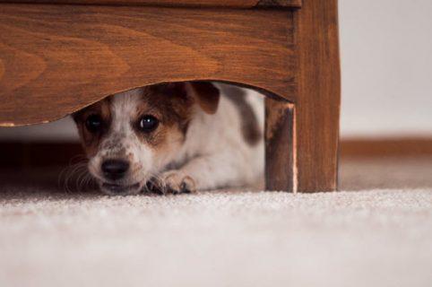 Perro debajo de la-cama