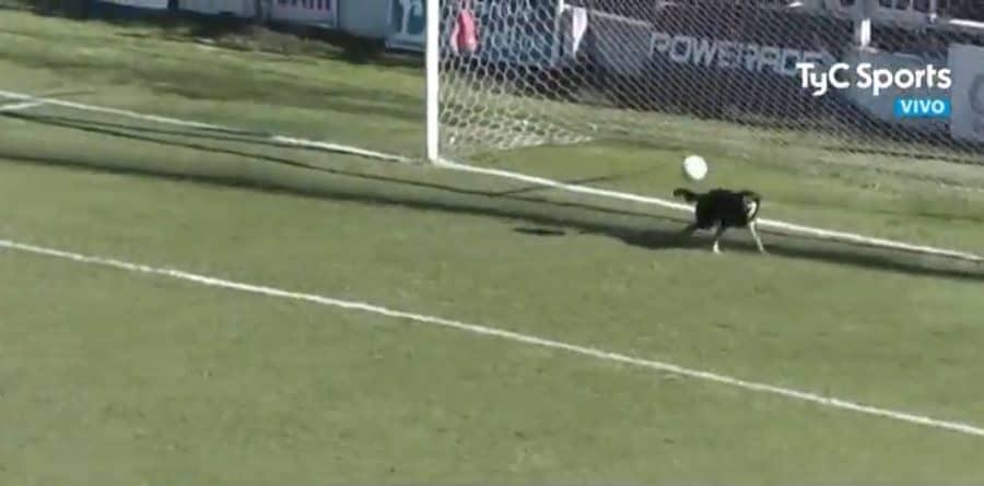 Perro ataja un balón en Argentina
