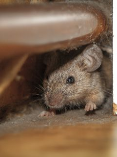 Ratón en una oficina