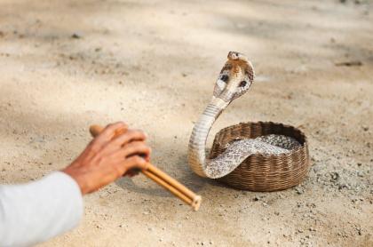 Encantador de serpientes.