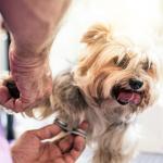 Corte de pelo a perro.