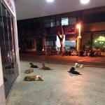 Perros Brasil