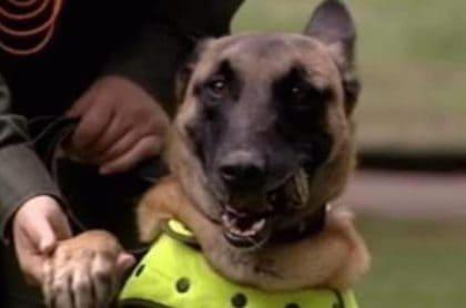 Perro antiexplosivos