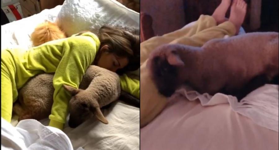 Greeicy durmiento con oveja