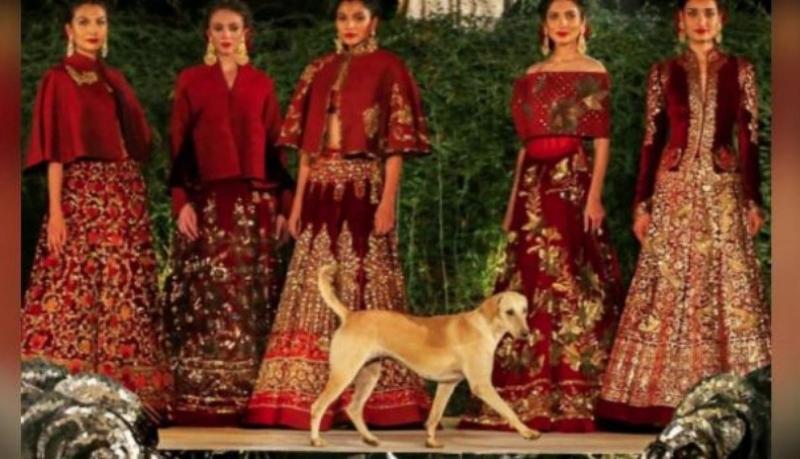 Perro en desfile de la India