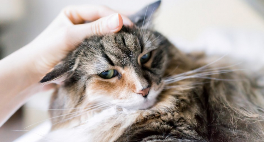 Mujer acaricia gato.