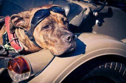 Perro en una moto