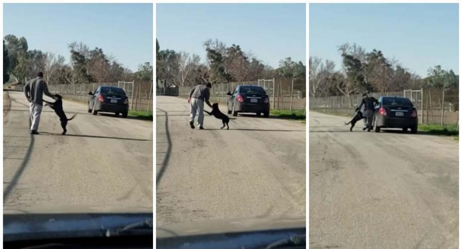 Hombre abandona a su perro.