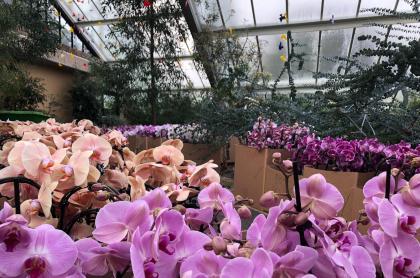 Orquídeas en los Kew Gardens de Londres
