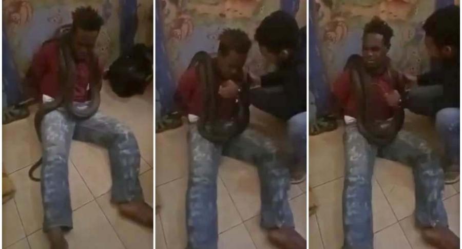 Interrogan a ladrón con una serpiente.