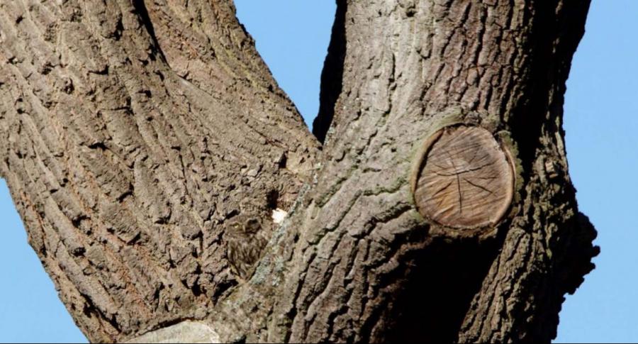 Lechuza en un árbol.