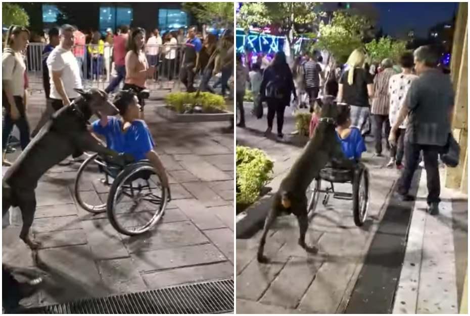 Perro empuja a dueño en silla de ruedas.