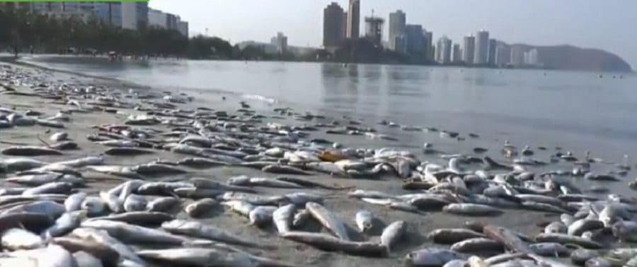 Mortandad de peces en Santa Marta