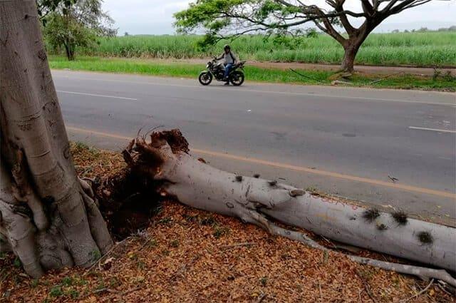Árbol caído en la vía Palmira-Cali